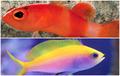 সবচেয়ে দামি ১১ প্রজাতির মাছ