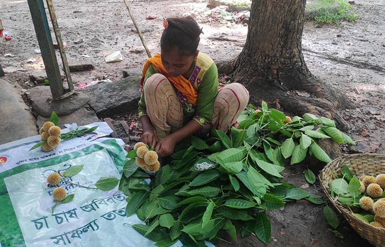 রাজধানীর সোহরাওয়ার্দী উদ্যানে বর্ষকাল আসার আগেই কদম ফুল ফুটেছে। এ ফুল সংগ্রহ করে বিক্রির জন্য প্রস্তুনি নিচ্ছে এই কিশোরী। ছবি: জাগো নিউজ