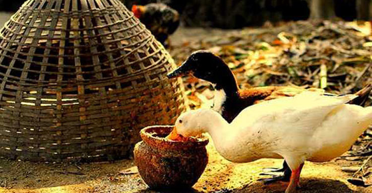 duck-in1