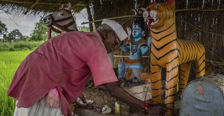 indian-tiger-1