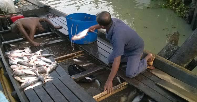 pirojpur-Fish