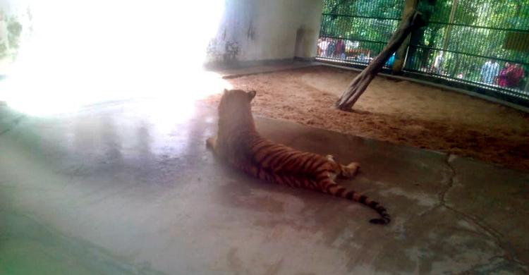 dkaka-zoo
