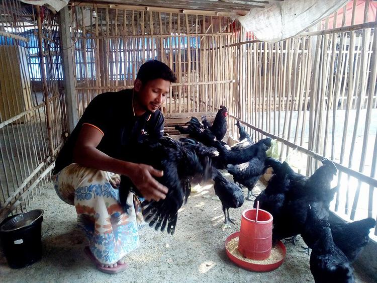 hen-in