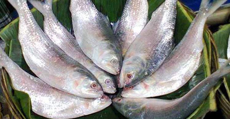 hilsa-in-(1)