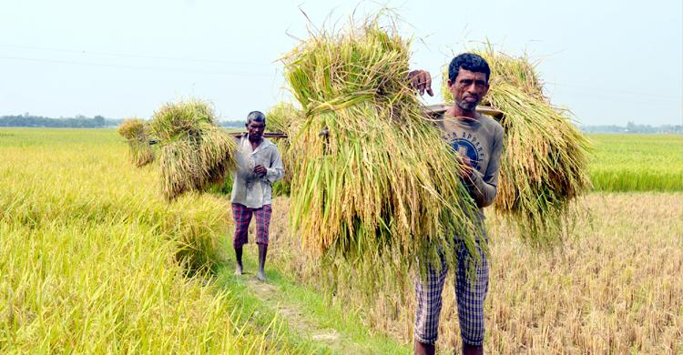 Thakurgaon-Rice-Prices
