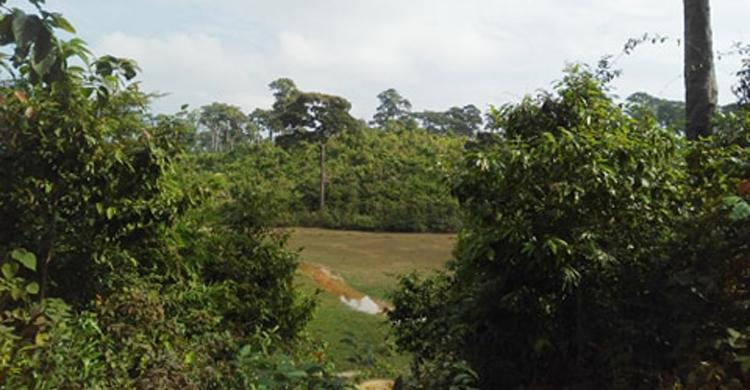 Coxs-Bazar-Elephant-Die-Fl
