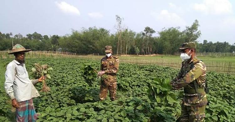 ক্ষেত থেকে সবজি কিনে কৃষকের পাশে সেনাবাহিনী