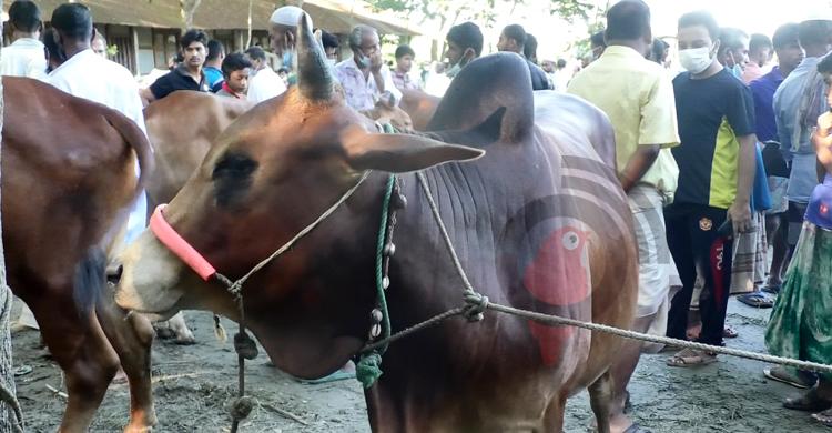 Bhola-Posur-Hat-3