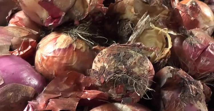 bite-nasim-vomra-secratary1