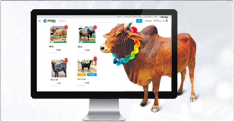 Cow-Market-2.jpg