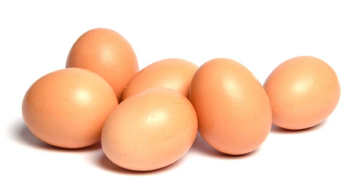 egg-in-1