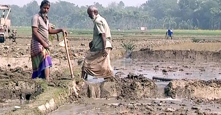 Faridpur-Boro-Dhan-Planting-1