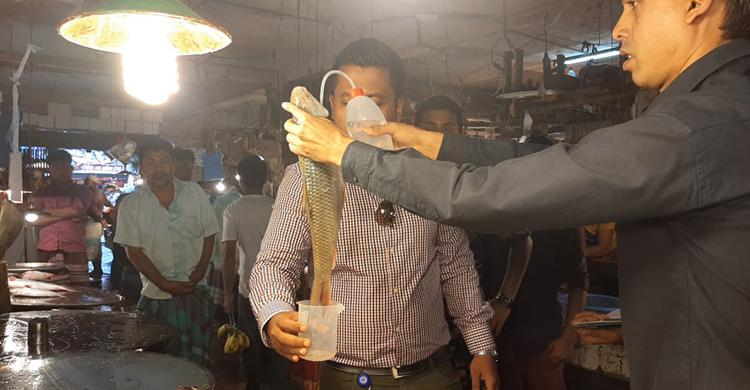 Fish-(3).jpg