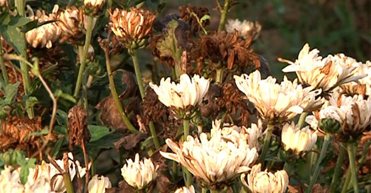Flower-in-(2)