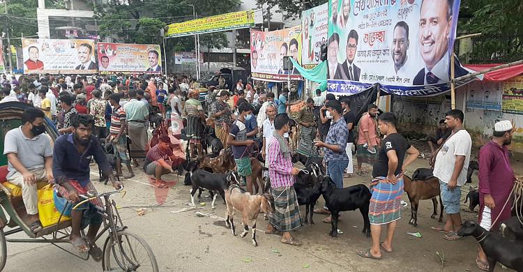 Goat_Market-1.jpg