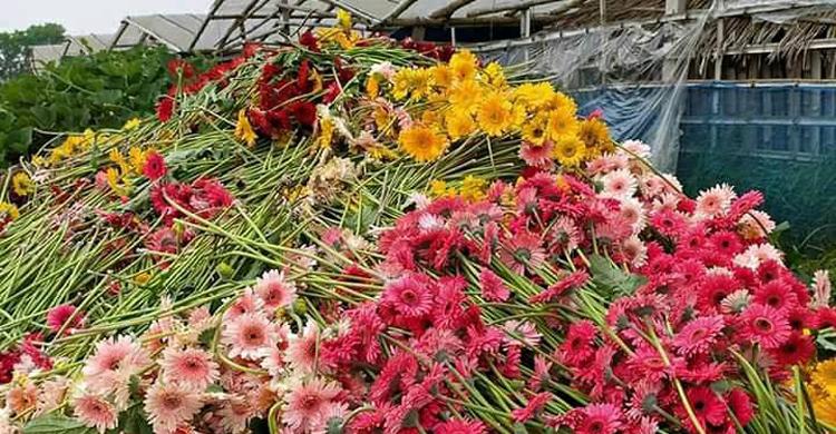 Jashore-flower