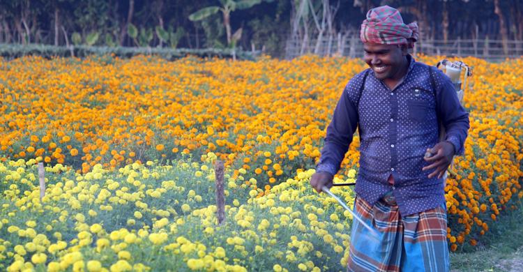 Jhenaidah-Flower-(5).jpg