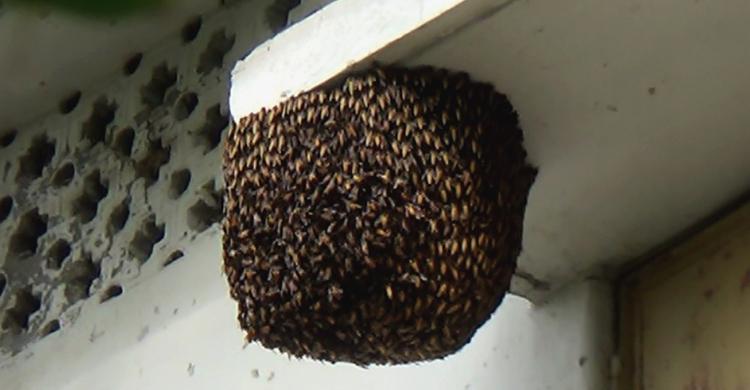 Kurigram-Bee-news
