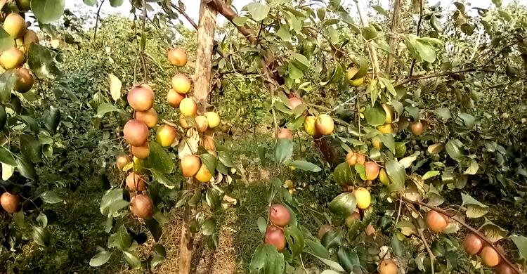 Madaripur-Shibchar