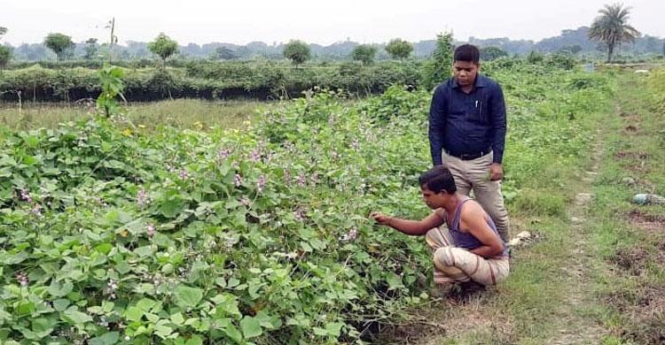 Masood-Rana-Farm