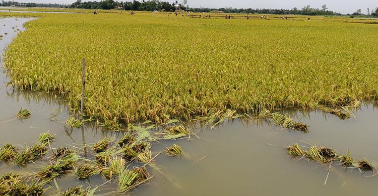 Mirzapur-(3)