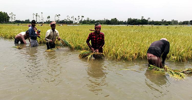 Mirzapur-(6)