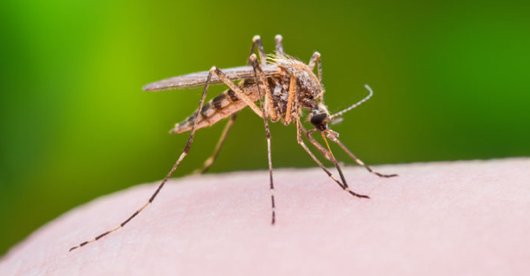 Mosquitoes-1