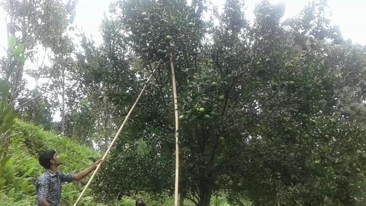 মৌলভীবাজার