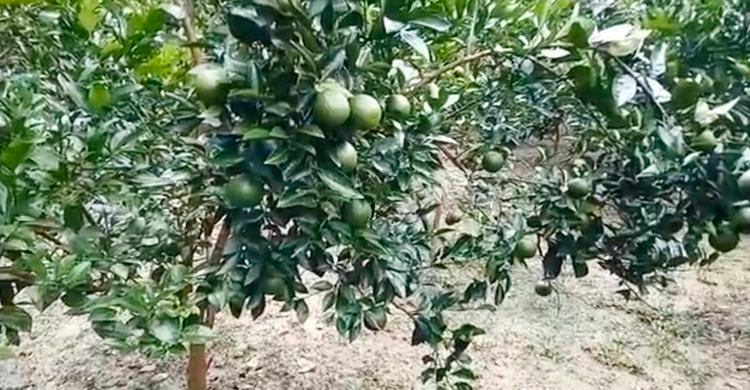 Pirojpur-(4).jpg