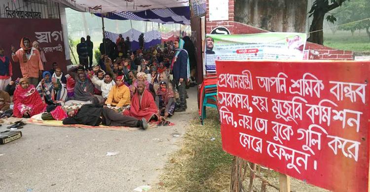 Rajshahi-jute