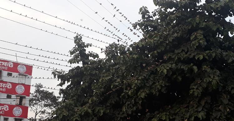 bird-in-