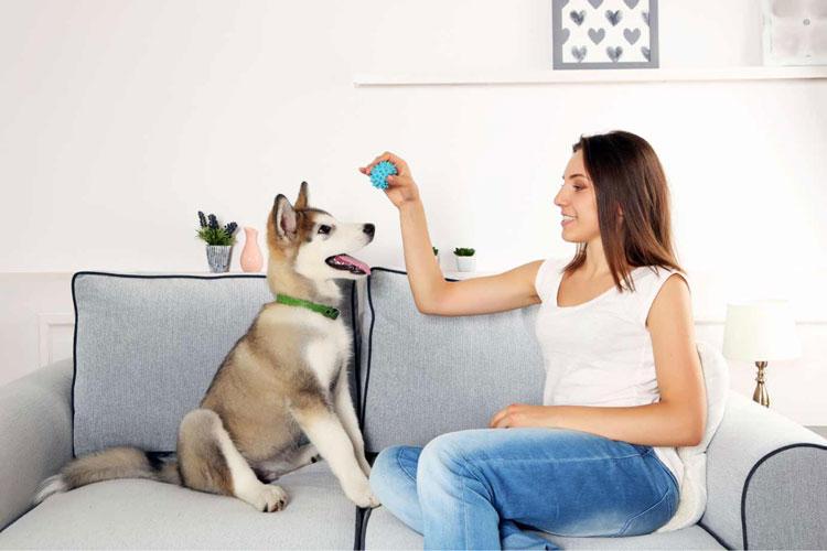 dog-in-(1)