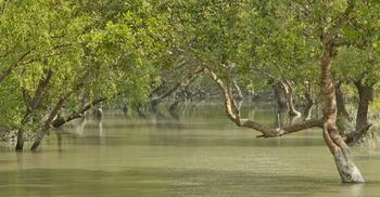 সুন্দরবনের হ্যারিটেজ সাইডে মাছ ধরায় ৯ জেলে আটক