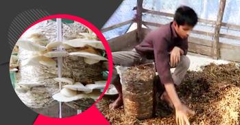 মাশরুম চাষে ভাগ্য ফিরেছে সাইফুলের