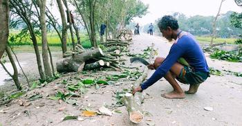 টেন্ডার ছাড়াই আত্রাই নদীর বাঁধের গাছ কেটে সাবাড়