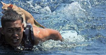জ্বলন্ত জাহাজ থেকে বিড়ালের জীবন বাঁচিয়ে প্রশংসিত থাই নৌবাহিনী