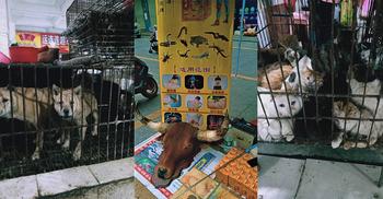 চীনের বাজারে আবারও বন্যপ্রাণী, বিক্রি হচ্ছে বাদুড়ের স্যুপ