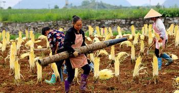 চীন যেভাবে দারিদ্র্যমুক্ত হতে চলেছে