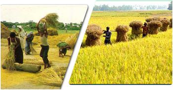 সবুজ পাতার খামে হেমন্ত এলো নেমে