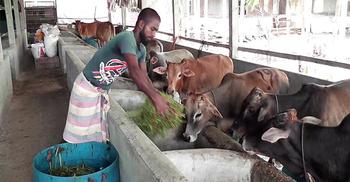 'প্রাণিসম্পদ খাতের প্রকল্প দেশে যুগান্তকারী উন্নয়ন ঘটাতে পারে'