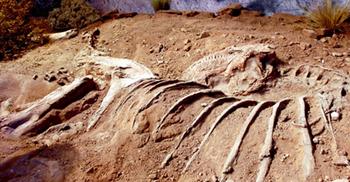 পৃথিবীর সবচেয়ে বড় ডাইনোসরের সন্ধান