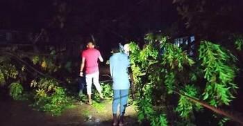 কালবৈশাখী : মহাসড়কে গাছ পড়ে সিরাজগঞ্জে যান চলাচল বন্ধ