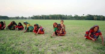 সালথায় পুরুষশূন্য এলাকা, ক্ষেত সামলাতে শিশুদের নিয়ে মাঠে নারীরা