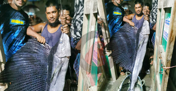 মেঘনায় ধরা পড়ল ২২ কেজি ওজনের 'পাখি মাছ'