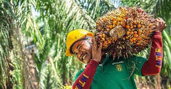 রাজনৈতিক বিরোধ: টালমাটাল মালয়েশিয়ার পাম অয়েল খাত