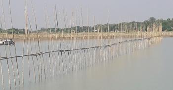 জাটকা ধরতে নদীতে জাল দিয়ে বাঁশের বেড়া