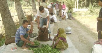 নড়াইলে উস্তা চাষে স্বাবলম্বী ৫০০ কৃষক