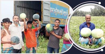 সোনাগাজীতে ২৩ কোটি টাকার তরমুজ উৎপাদন