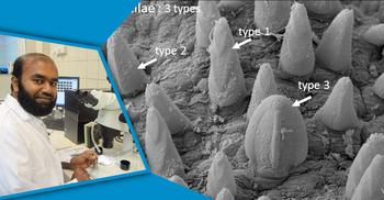 হাতিয়া উপকূলে নতুন প্রজাতি আবিষ্কার করলেন নোবিপ্রবি শিক্ষক
