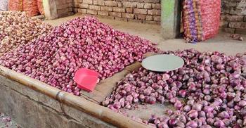 ভারতীয় পেঁয়াজ আমদানির খবরে কেজিতে দাম কমল ৩০ টাকা